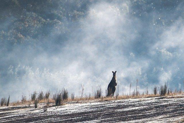 Australská fauna ohrožena